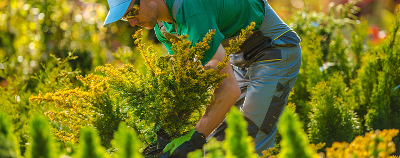 landscaping business ideas