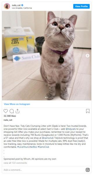pet influencer, Nala cat, recommending TidyCat from Sam's Club