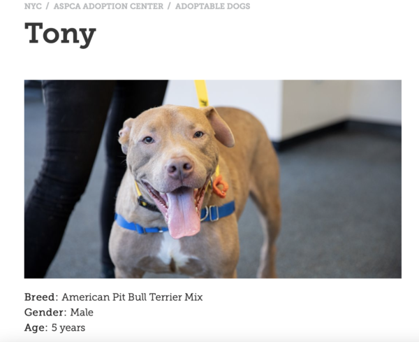 the ASPCA does nonprofit storytelling by telling the stories of the animals they rescue