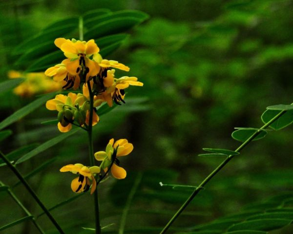 Yellow flowers with a green background